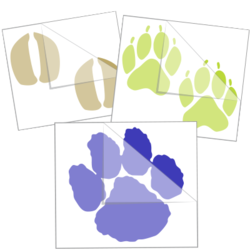 Paw Print Car Stickers and Decals