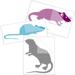 Rat Car Stickers and Decals