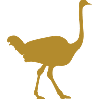 Ostrich Car Stickers and Decals