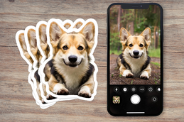 Dog Photo Stickers