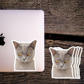 Cat Photo 3