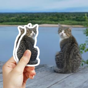 Cat Photo 4