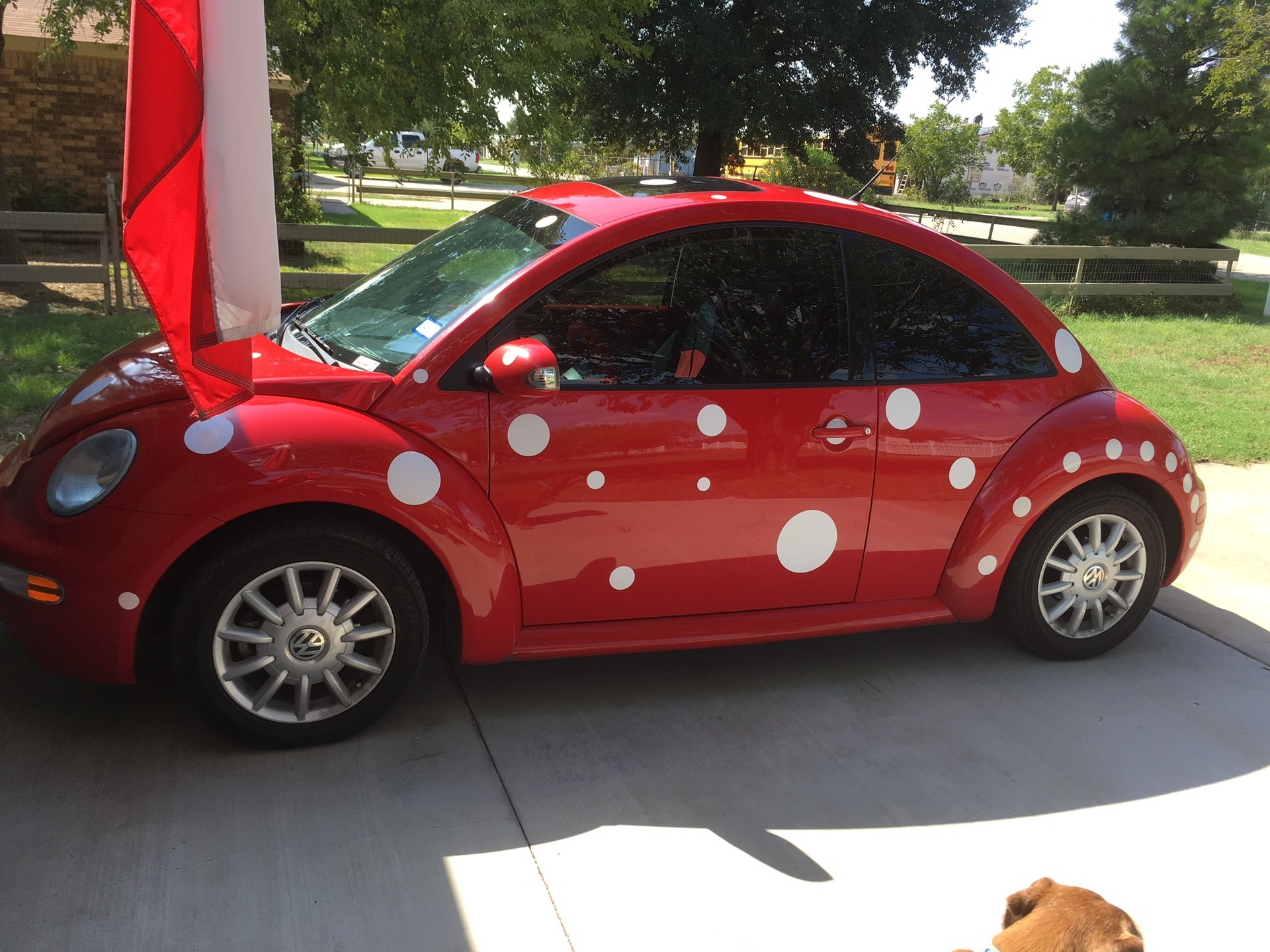 Tommanee's photograph of their Polka Dot Circle Shapes Sticker