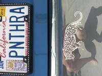 Kim's photograph of their Detailed Jaguar Sticker