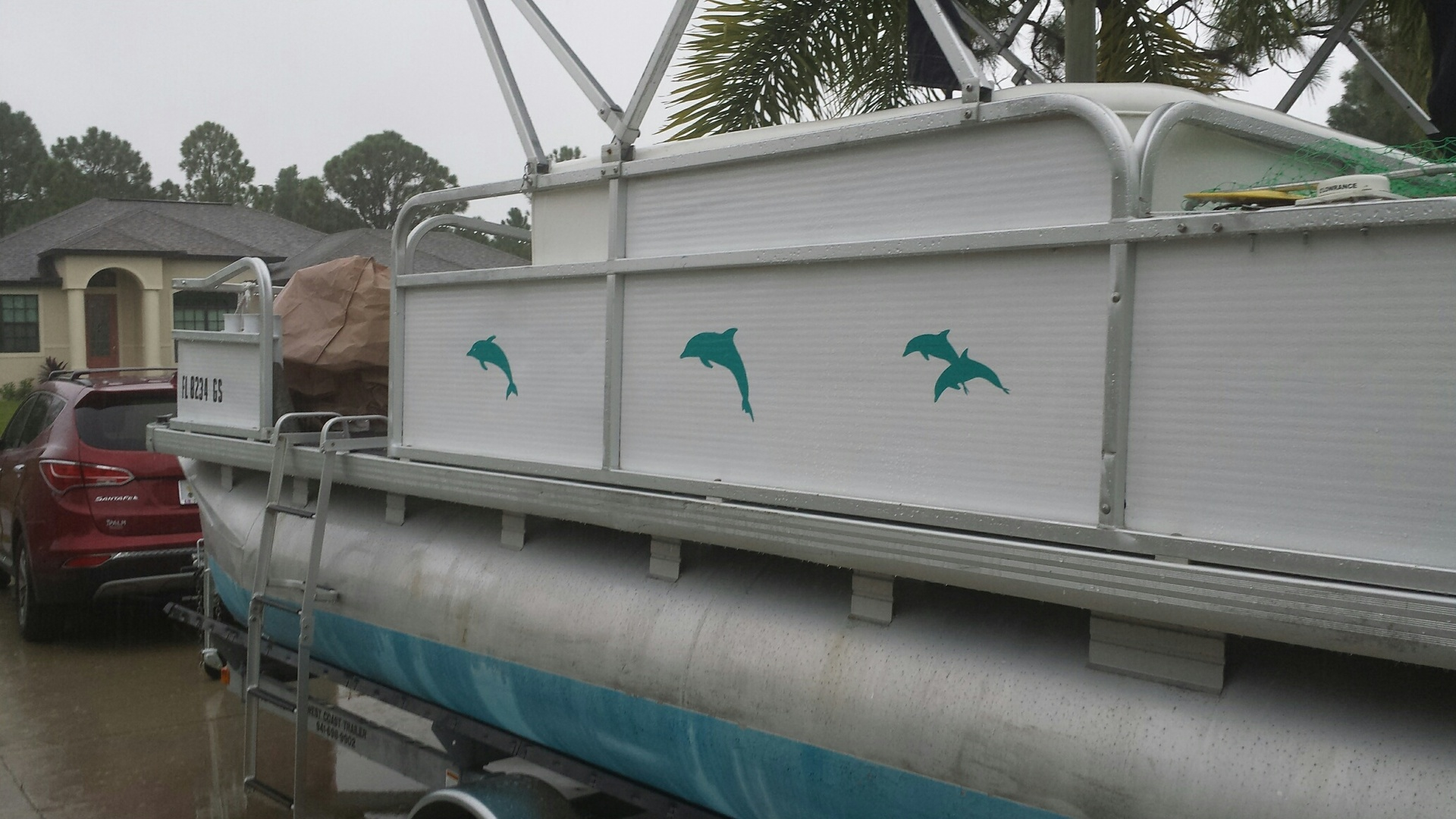 William's photograph of their Two Dolphins Jumping Sticker