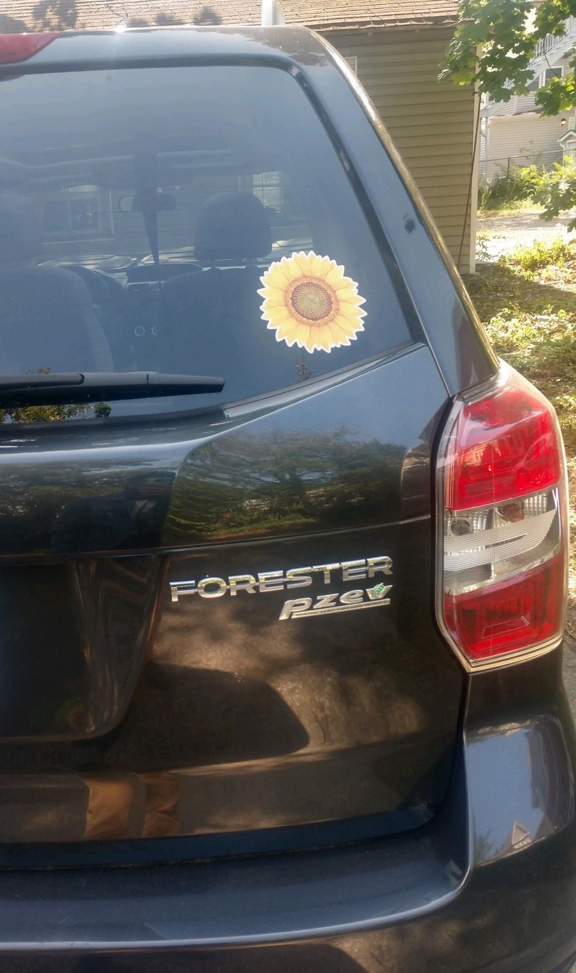 Luke's photograph of their Realistic Sunflower Sticker