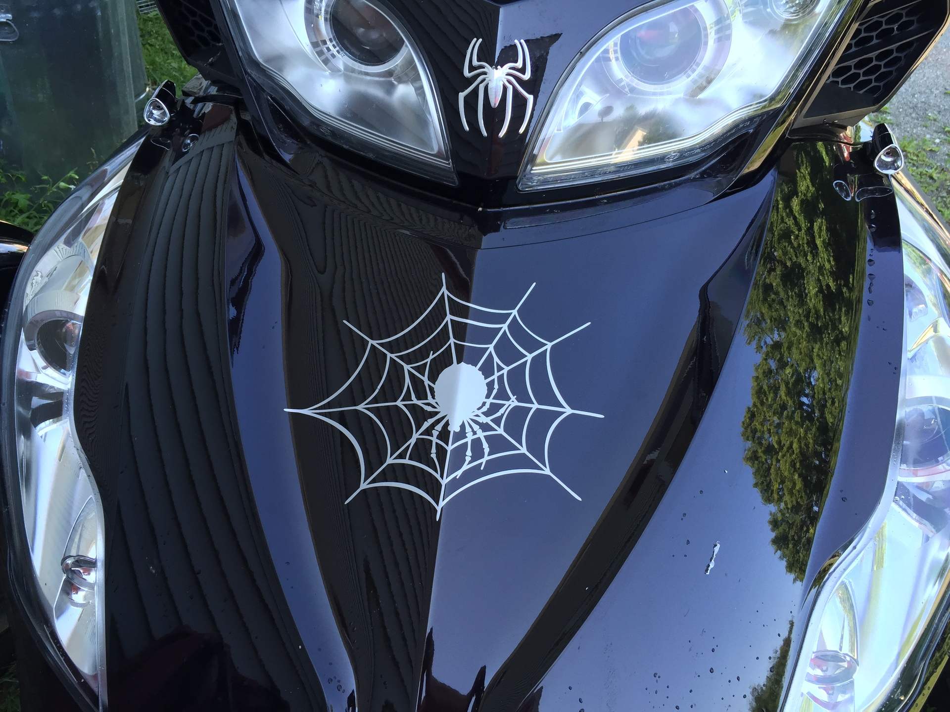 Nancy's photograph of their Spider On Web Sticker