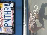 Kim's review of Detailed Jaguar Sticker