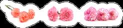 The Long Stem Carnations Gift On White Sticker