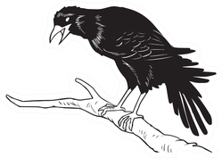 A Crow Standing On A Tree Branch Sketch Sticker
