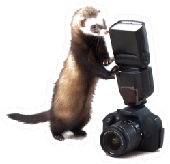 A Ferret With A Camera Sticker