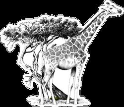 A Giraffe Standing Near A Tree Sketch Sticker