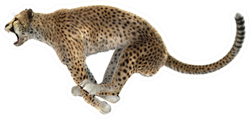A Jumping Cheetah Isolated On White Sticker