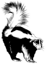 A Large Black Skunk With A White Stripe Painted Ink Sticker
