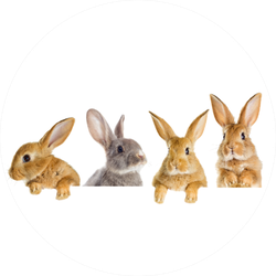 A Set Of Rabbits Peeking Sticker