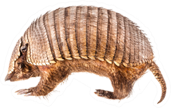 A Stuffed Armadillo Isolated On White Sticker