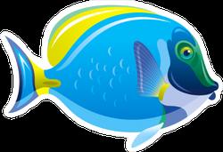 Acanthurus Surgeon Fish Sticker