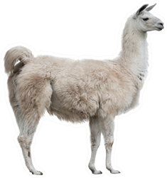 Adult Lama Exterior Isolated On White Sticker