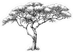 African Marula Tree Illustration Sticker