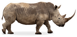 African Southern White Rhino With Large Pointy Horn Sticker