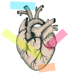 Anatomical Abstract Heart Colorful Illustration Sticker