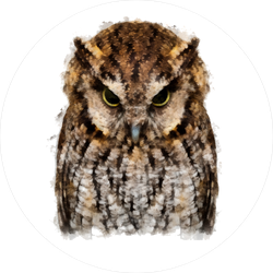 Angry Owl Circle Sticker