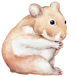 Animal Sketch Cute Little Hamster That Sits Funny Sticker