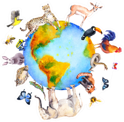 Animals Around And On The World