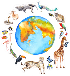 Animals Around The World Sticker
