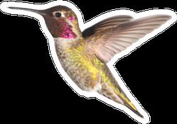 Annas Hummingbird In Flight Illustration Sticker