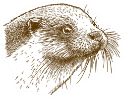 Antique Drawing Illustration Of Otter Head Sticker
