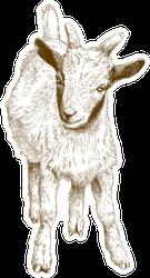 Antique Engraving Illustration Of Goat Kid Sticker