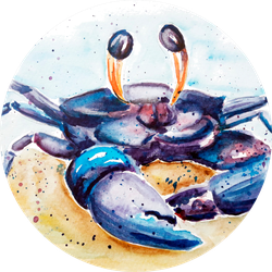 Aquarelle Painting Of Crab Sketch Art Illustration Sticker