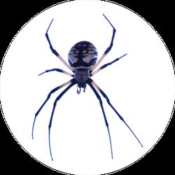 Argiope Aurantia Spider Sticker