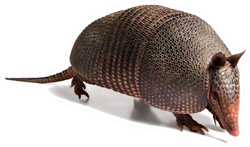Armadillo Of Six Bands Sticker