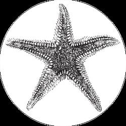 Asteria (starfish) Vintage Engraved Illustration Sticker