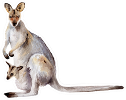 Australia Animal Watercolor Drawing: Kangaroo With Cub Sketch Sticker