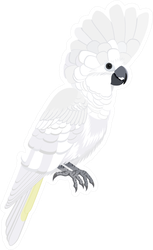 Australian Bird White Cockatoo Sticker