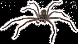 Australian Huntsman Spider Sticker
