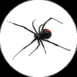 Australian Redback Spider Sticker