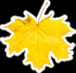 Autumn Maple Leaf Sticker