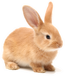Baby Of Orange Rabbit On White Sticker