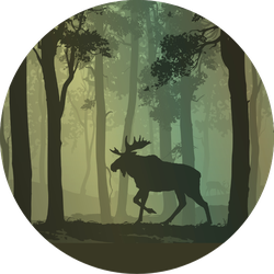 Background With Moose Walking In The Forest Sticker