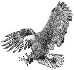 Bald Eagle Swooping Down to Attack Prey Sticker