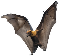 Bat Flying Upright Sticker