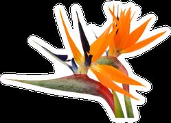 Beautiful Bird Of Paradise Flowers Up Close Sticker