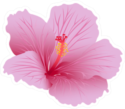 Beautiful Blooming Hibiscus Sticker