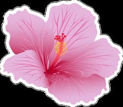 Beautiful Blooming Hibiscus Sticker