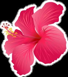 Beautiful Blooming Pink Hibiscus Sticker