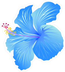 Beautiful Blue Blooming Hibiscus Sticker